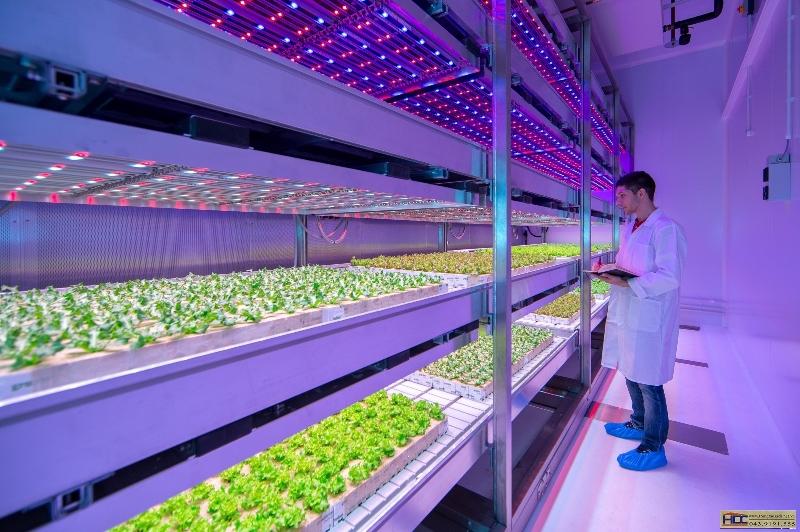 Những sai lầm cần tránh khi dùng đèn LED trong nông nghiệp, bà con nên chú ý