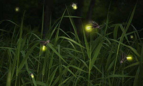 Chế tạo đèn LED ý tưởng từ đom đóm