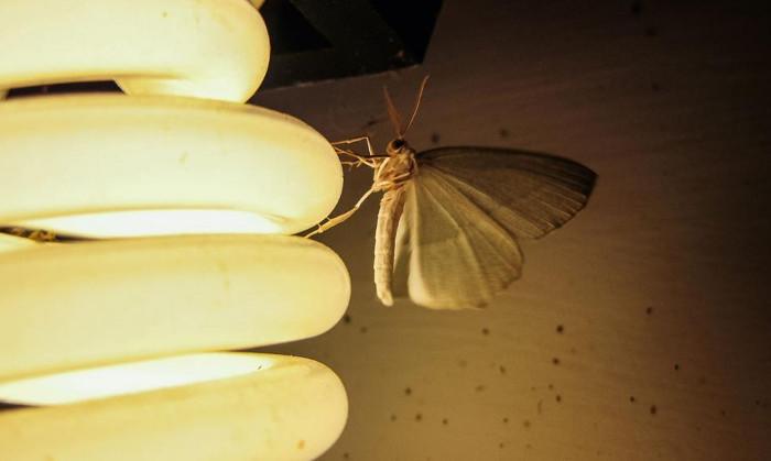 Đèn LED màu nóng sẽ ít thu hút muỗi hơn so với đèn có màu lạnh
