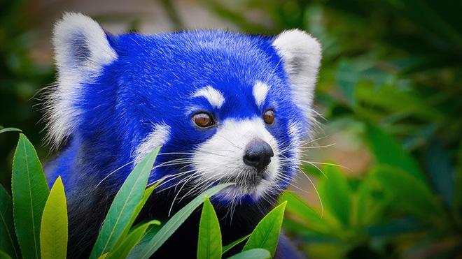 Firefox Quantum Cáo xanh đã ra mắt phiên bản beta.