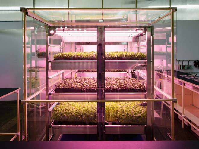 Nông trại theo mô hình Lokal cho phép mọi người trồng và thu hoạch rau xanh trong nhà.