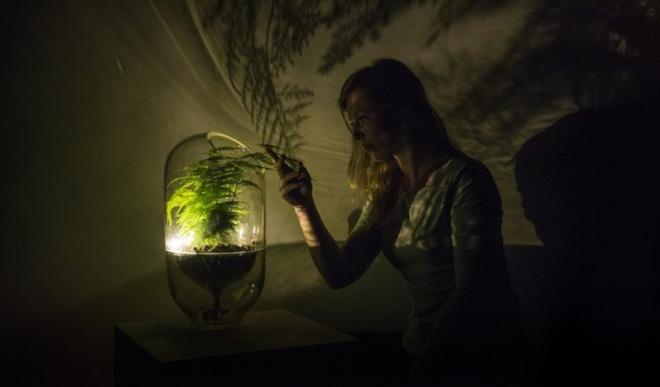 Ý tưởng độc đáo biến cây xanh thành đèn thắp sáng trong đêm
