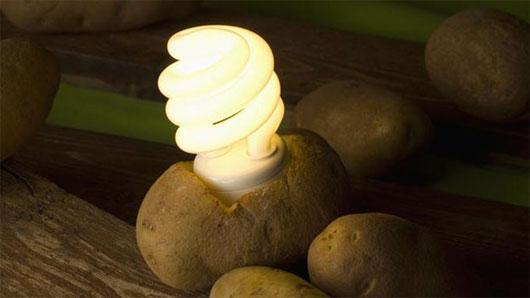Thắp sáng đèn led bằng một loại pin mới là...khoai tây